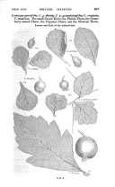 Página 867